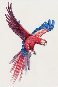 ANIMALS - NADIA ROMERO Loro ilustración