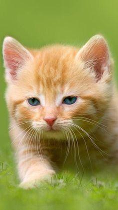 Samsung Galaxy S7 Kitten Wallpaper