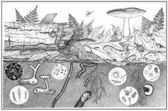 Manual de manejo del suelo en agricultura ecologica