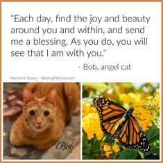 A message from the heart of angel cat Bob Pet Quotes, Animal Quotes, Animal Communication, Always Thinking Of You, 10 Month Olds, Love My Kids, Pet Loss, Rainbow Bridge, Animal Rights