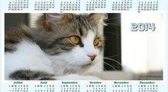 Chat Web, Cat Calendar, Cats, Animals, Calendar, Gatos, Animales, Animaux, Animal