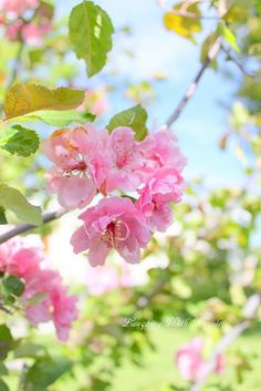 Cherry blossom on a bright spring day. Spring Blossom, Spring Has Sprung, Hello Spring, Plantation, Flowering Trees, Spring Flowers, Flowers Garden, Spring Colors, Spring Time
