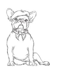 Playful line drawing-style Bulldog, German Shepherd, and French Bulldog illustrations by Michele Nicolette of Inkopious for t-shirts, hoodies, & tote bags. Chien Cane Corso, Animal Drawings, Art Drawings, Drawings Of Dogs, French Bulldog Drawing, Tableau Pop Art, French Bulldog Clothes, Dog Milk, Images Vintage