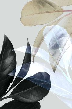 Trending Now Art Modern Botanical Print Black Leaf Poster Guest Room Wall Art Grey Leaves Tropical Decor Christmas Gift Plant Photo Leaf Wall Art, Canvas Wall Art, Leaf Art, Art Chicano, Impressions Botaniques, Plakat Design, Tropical Leaves, Botanical Prints, Picture Wall