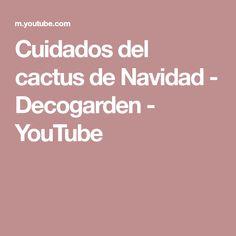 Cuidados del cactus de Navidad - Decogarden - YouTube Youtube, Cactus Care, Christmas Cactus, Plants, Youtubers, Youtube Movies