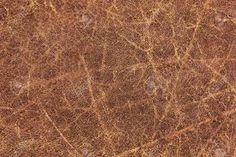 Image result for cowhide texture