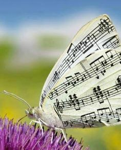 Music on a butterfly's wings