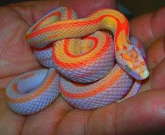 17 Hypnotically Colorful And Ridiculously Good Looking Snakes