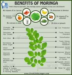 Benefits Of Moringa #health #nature For More www.livealittlelonger.com