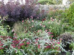 via Pentreath-Hall.com The Constant Gardener, Modern Art, Gardens, Flowers, Plants, Outdoor Gardens, Contemporary Art, Plant, Royal Icing Flowers