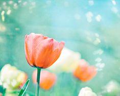 """Garden of Dreams"" - Flower Photography  tulips peach mint print by CarolynCochrane, $30.00"