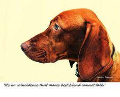 Vizsla!   Man's Best Friend Photo Greeting Cards Handmade by ZenaAnnaPhotos