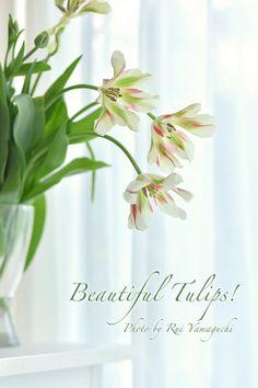 写真映えするお花って?チューリップ編 |写真でPetit Happy♡福岡のフォトスタイリング&写真教室のPetit Works -プチワークス- #tulip #photo