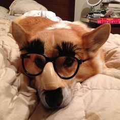 """""""Outside of a dog, a book is man's best friend. Inside of a dog, it's too dark to read."""" ― Groucho Marx 