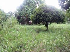 Amplio terreno con arboles frutales en Venta en Ciudad Bolívar, Bolívar - REMAX.COM.VE - Su Franquicia Inmobiliaria