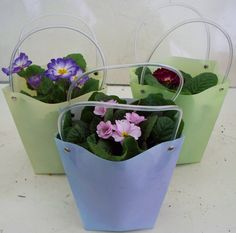 18CM FLOWER BAGS WITH 1L PRIMULA (PLA16)