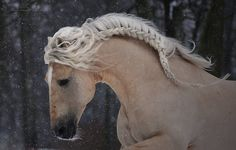 Once upon a time, when the land was a little brighter and softer than it is today, there was a beautiful wild horse with a mane braided by fairies ...