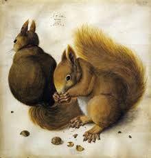 albrecht durer - Two Squirrels one eating a Hazelnut