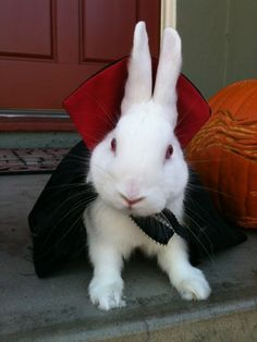 Epic Pet Costume: Bunnicula @ Halloween Culture