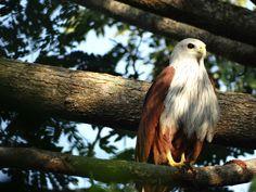 Bird photography @ Chukki Mane