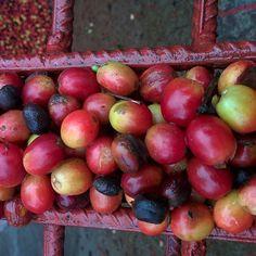 Chocolate and coffee every AM! It is coffee picking season in Nix! #nicaragua #coffee #jinotega #bfast
