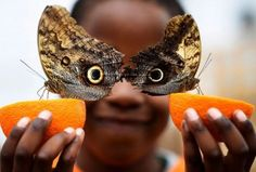 Bjorn aged 5 smiles as he poses with a Owl butterfly during an event to launch the Sensational Butterflies exhibition at the Natural History Museum in London Britain March 23 Martinez by parismatch_magazine Pictures Of The Week, Cool Pictures, Cool Photos, Random Pictures, Amazing Photos, Susan Sontag, Photoshop, Cannabis, Articles For Kids
