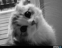 Diesen süßen Katzen kann niemand widerstehen #24