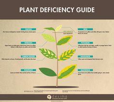 Identifying Plant Nutrient Deficiencies — desima