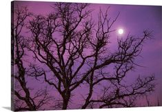 Premium Thick-Wrap Canvas Wall Art Print entitled Morning moon over silhouette of bare tree against purple colored sky near Dallas, Texas., None