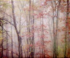 photograph from violetjulia, taken in the rural Appalachian region of Virginia