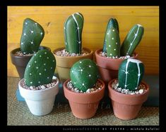 Perfect for the middle east sun and my rock garden, Stone cactus