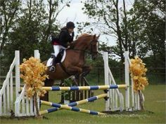Beautiful All Rounder for Sale - Beautiful All Rounder for Sale http://www.equineclassifieds.co.uk/Horse/beautiful-all-rounder-for-sale-listing-1003.aspx#.VA7LTKMTCZY