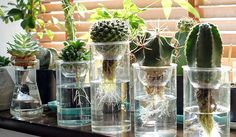 Hydroponics Australia - Everything you should know about Aquaponics Made Easy, Home Aquaponics, Backyard Aquaponics and Ecofriendly Aquaponics. Water Plants Indoor, Indoor Garden, Garden Plants, Succulents In Glass, Plants In Jars, House Plants Decor, Plant Decor, Hydroponic Gardening, Hydroponics