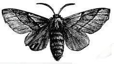 Latest Grey Ink Moth Tattoo Design