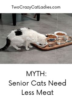 We've all heard from our vets that senior cats need less protein in their diets. This is categorically untrue and can be harmful to our older kitties. Raw Pet Food, Cat Food, Crazy Cat Lady, Crazy Cats, Cat Nutrition, Us Vets, All About Cats, Cat Health, Dog Bowls