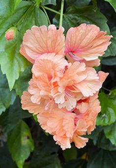 flores hermosas imagenes - Buscar con Google