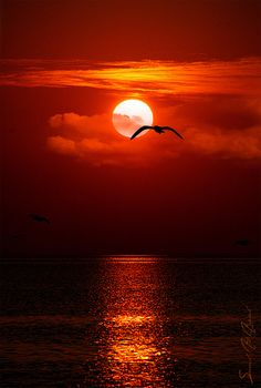 Beautiful world heaven — The Sunset perfection of the nature Amazing Sunsets, Amazing Nature, Beautiful World, Beautiful Images, Beautiful Sunrise, Beautiful Moon, Belle Photo, Pretty Pictures, Beautiful Pictures With Quotes