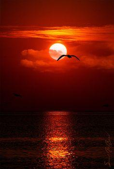 amazing red sunset