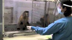 macaco recompença - YouTube