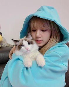 BlackPink LISA's cat Leo, In Blue…Cute photo updates – Black Pink Revolution Lisa Instagram, Fake Instagram, Kpop Girl Groups, Korean Girl Groups, Kpop Girls, Blackpink Lisa, Kim Jennie, Blackpink Photos, Cute Photos