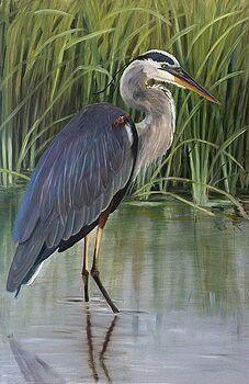 Pretty blue heron with marshgrass. Bird Painting Acrylic, Watercolor Bird, Canvas Art, Canvas Prints, Photo Canvas, Bird Drawings, Blue Heron, Sea Birds, Colorful Birds
