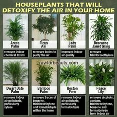 Indoor plants that clean the air you live in. Get indoor plants that will also be helpful!