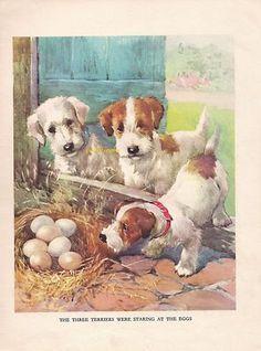 Sealyham Terrier Puppies 1930s Childrens Vintage Art Print AE Kennedy  | eBay