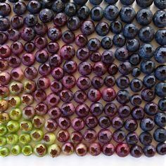 » Hermosas y Ordenadas Composiciones de Alimentos en Degradados de Color
