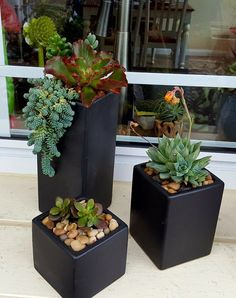 Indoor Gardens For Your Home Succulent Gardening, Garden Terrarium, Hydroponic Gardening, Garden Planters, Succulents Garden, Planting Flowers, Patio Plants, Outdoor Plants, Container Plants