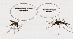 DikariDV. Заметки на полях: Здравствуй, Первый комар!