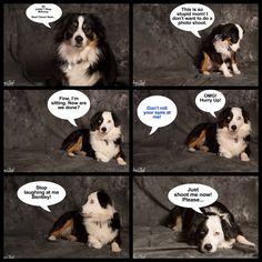 Photo humor Pet Photography, Jackson, Photoshoot, Humor, Pets, Animals, Photo Shoot, Animals And Pets, Animales