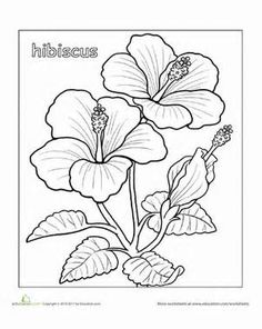 Second Grade Nature Worksheets: Hibiscus Coloring Page