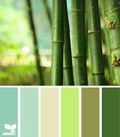 bamboo hues. new apartment's kitchen and living room are the darkest green. looking for a way to blend in some soft blues