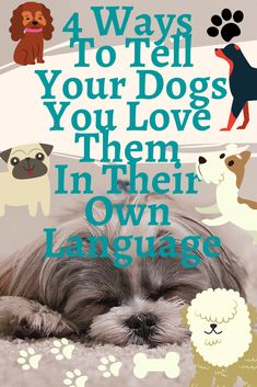 4 Ways To Tell Your Dogs You Love Them In Their Own Language